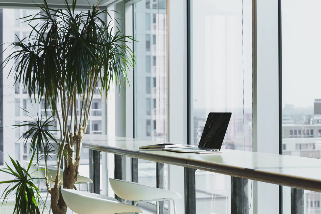 Office space with a large plant next to a desk